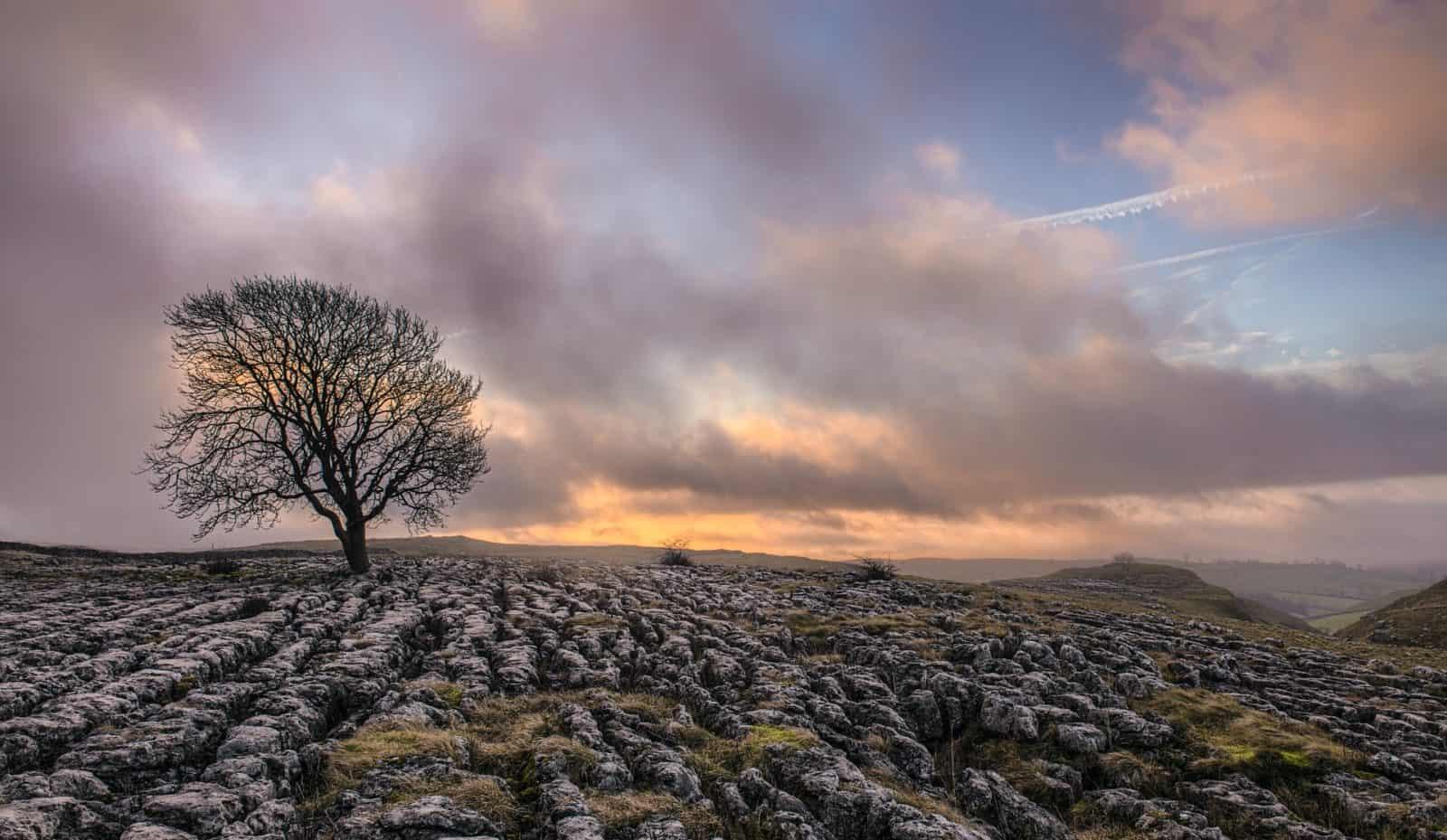 Lone tree in Malham, UK