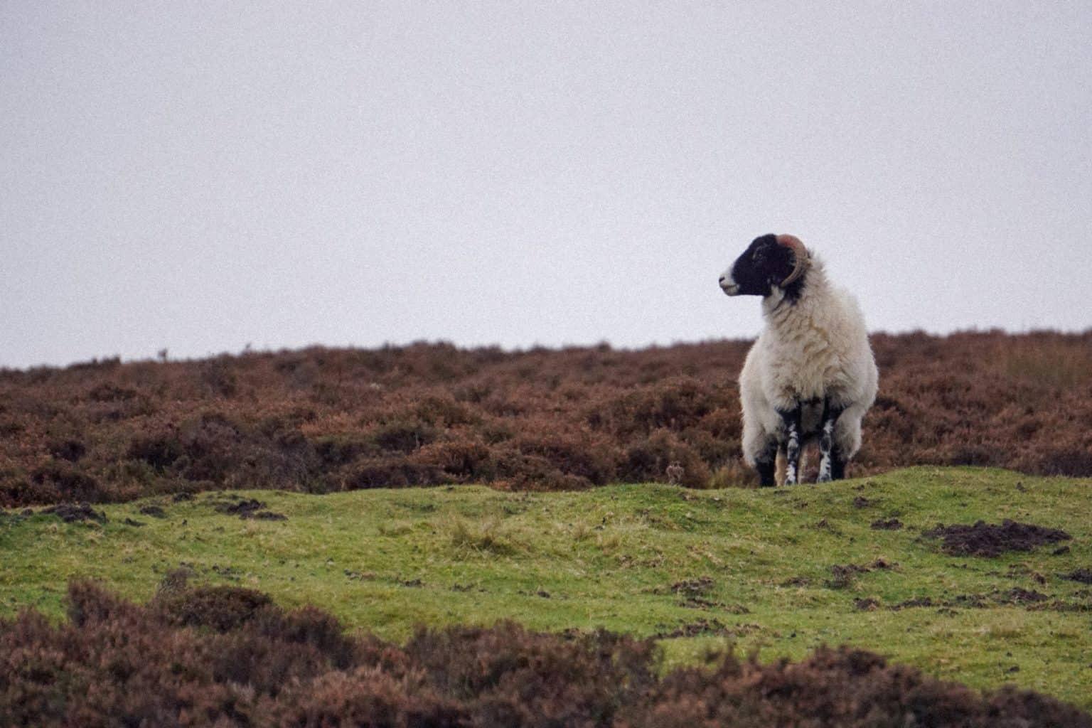 Wildlife at North York Moors Park