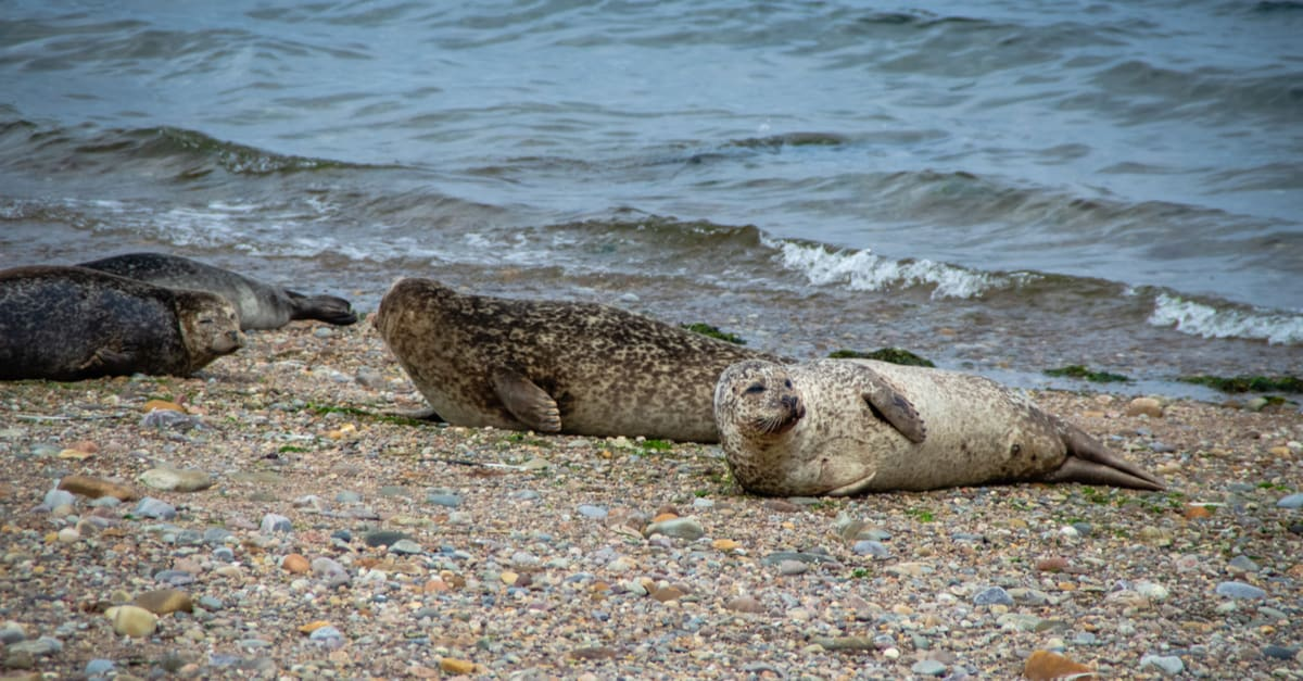 Seals along the Speyside Way